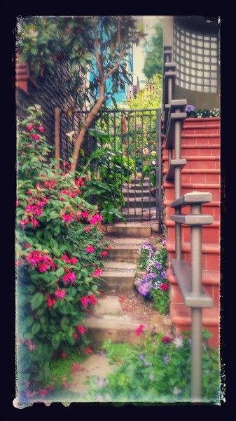 SF_backyard_garden